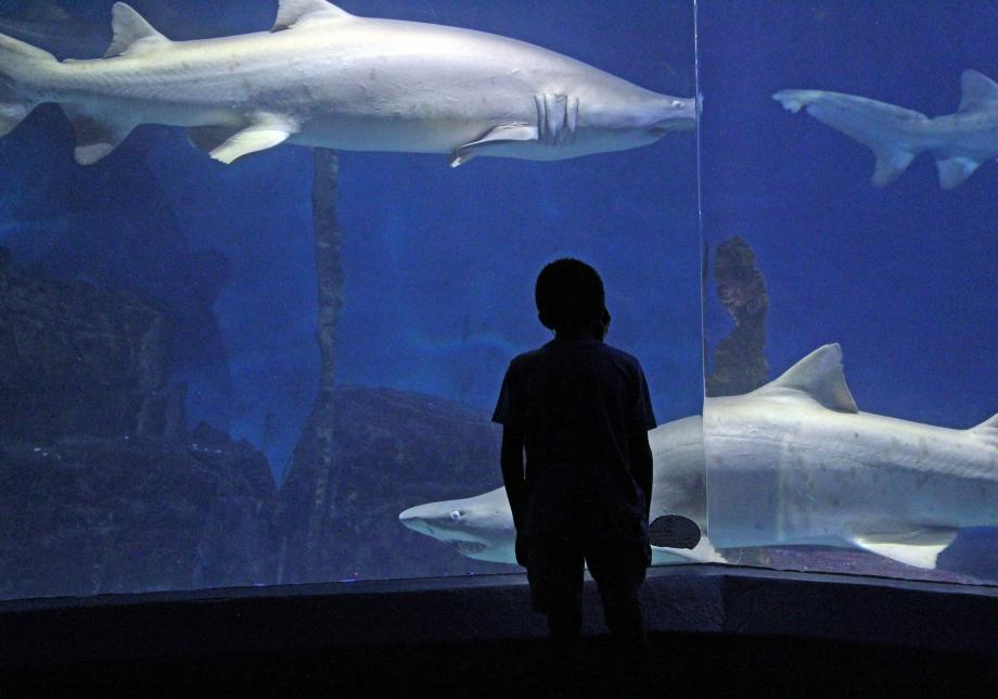 The silhouette of a child is shown in front of a large aquarium with sharks swimming in it.