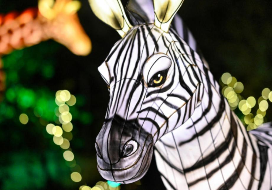 An illuminated figure of a zebra faces the camera, with a giraffe display and more holiday string lights visible in the background.
