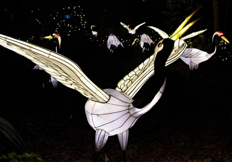 A holiday lights display shows a group of swan figures on the ground. Some have their wings out or their beaks up in the air. More holiday lights are visible behind them.